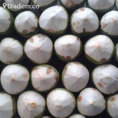 Ola Thạch Dừa Xiêm